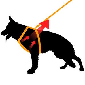 Esempio di come lavora la pettorina per cani ad h