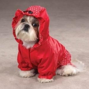 modello di vestiti per cani con cappuccio