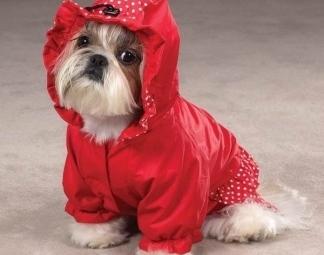 modello di vestito per cani con cappuccio