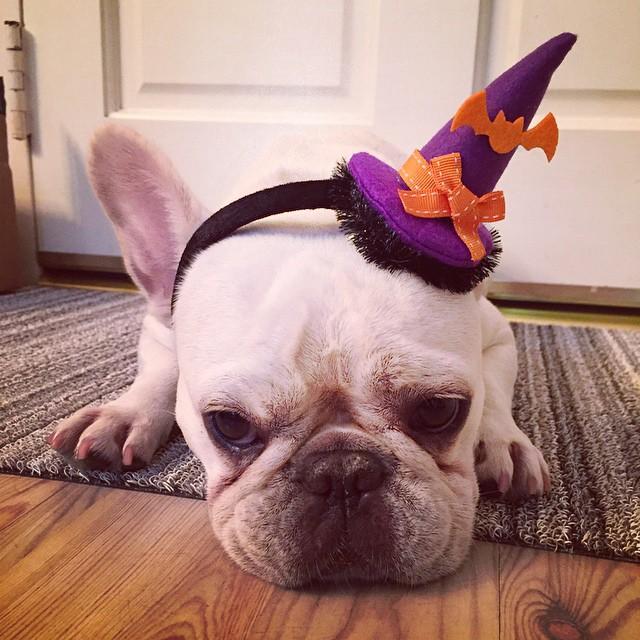 Un cappello allegro per un cane abbacchiato