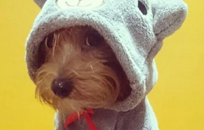 Un cane soddisfatto del suo costumino per Halloween