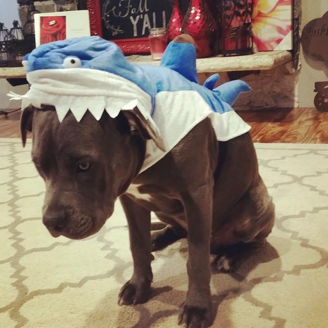 Un cane vestito da pesce-cane
