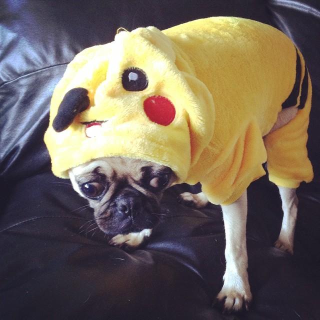 Un cane-pokemon non molto entusiasta