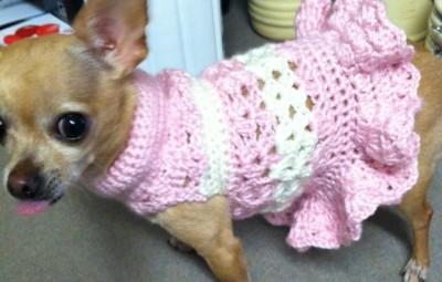 un modello di cappottini per cani