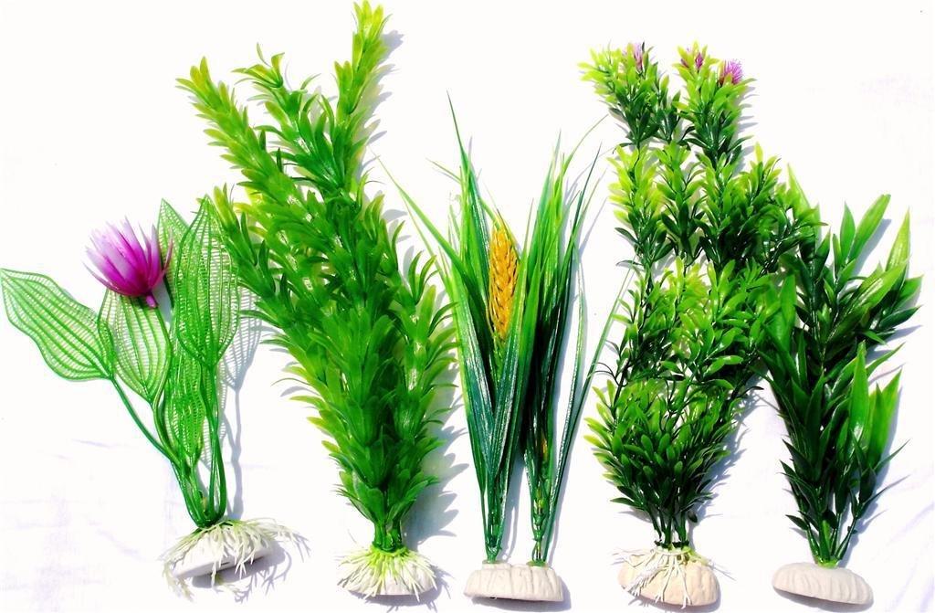 piante per acquario vere o finte pet magazine