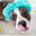 Un cucciolo pronto per lo shampoo per cani