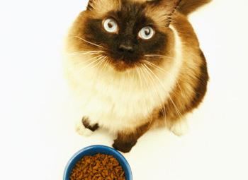 Una ciotola piena di crocchette per gatti