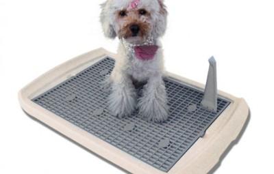 Modello di lettiera per cani