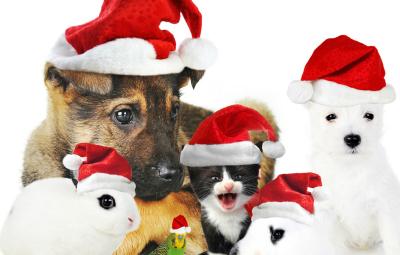 Natale-2014-Pet-Magazine