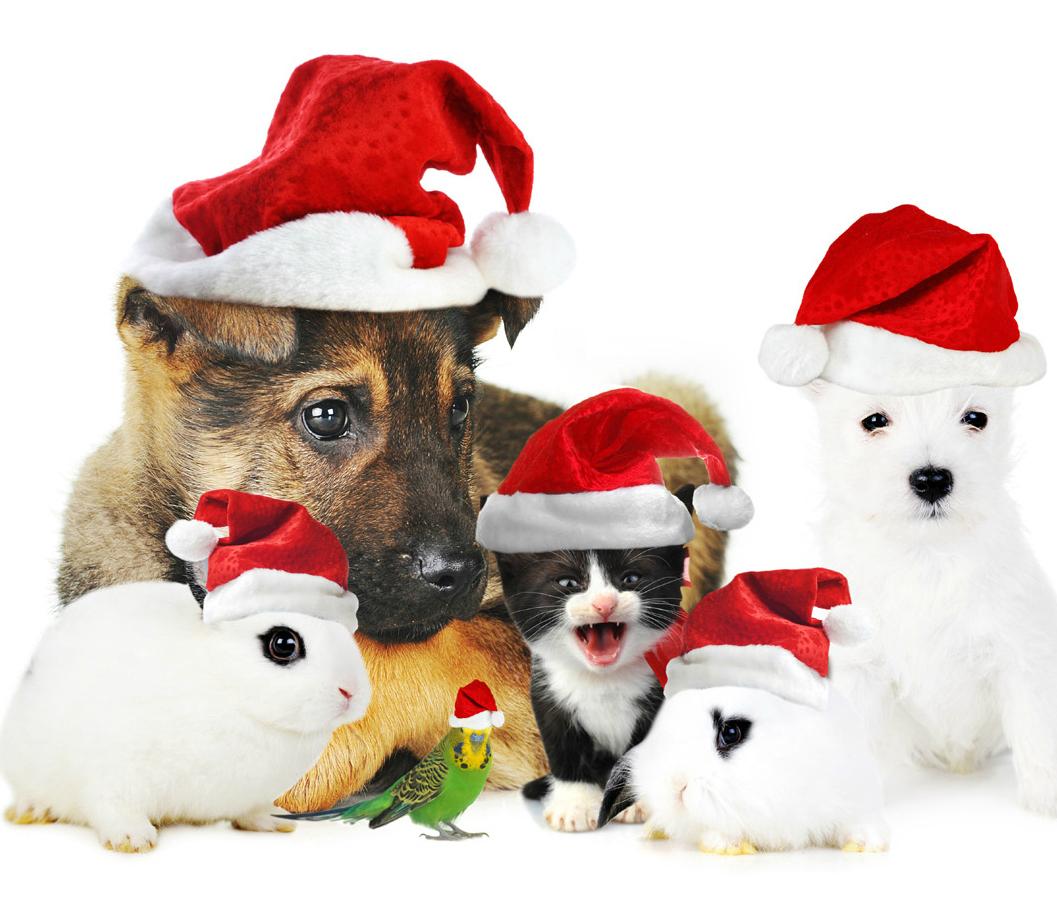 Animali Natale Immagini.Buon Natale 2014 Da Pet Magazine