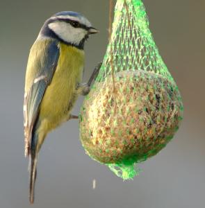 mangime per uccelli