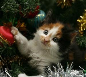 In cerca dei regali per gatti