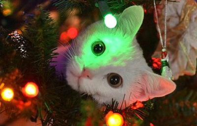 regali per gatti sotto l'albero di natale