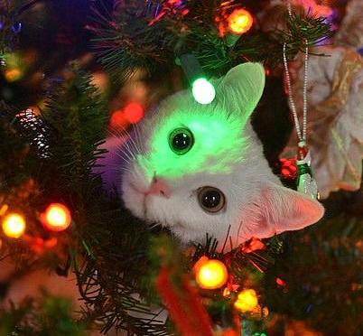 I migliori regali per gatti pet magazine for Comprare pesci online