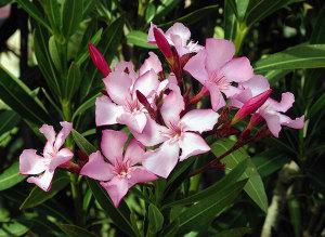 10 piante velenose per i nostri gatti