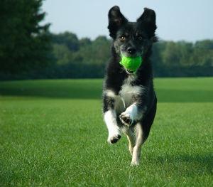 Integratori per cani