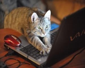 siti sui gatti