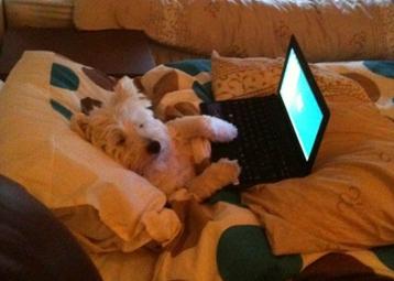 siti sui cani