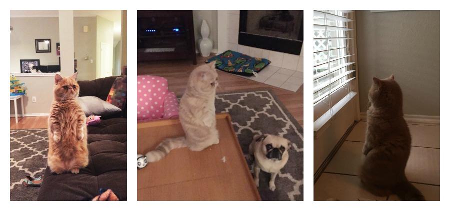Gatti divertenti George gatto piedi