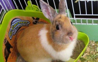 lettiera per coniglio