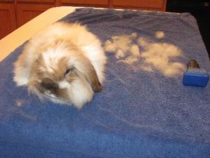 spazzola furminator per conigli
