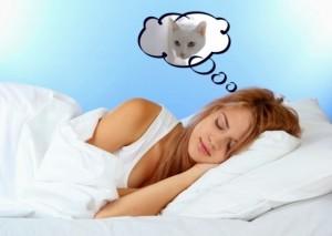 sognare-gatti