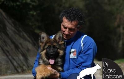 cucciolo-pastore-tedesco-pelo-lungo