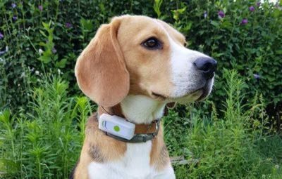 593c9e919e90d7 Accessori per cani - Pet Magazine
