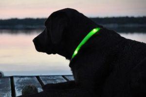 Collare luminoso per cani migliore