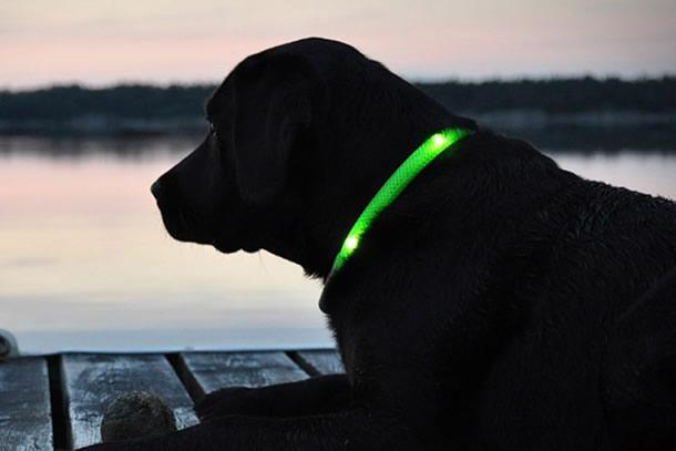 collare luminoso per cani