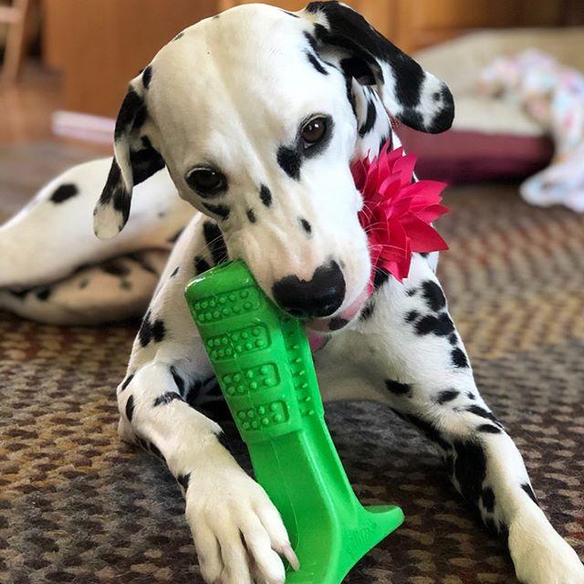 spazzolino migliore per cani